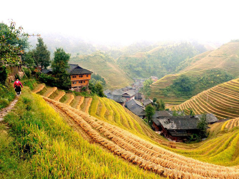 Chinese village and fields at harvest
