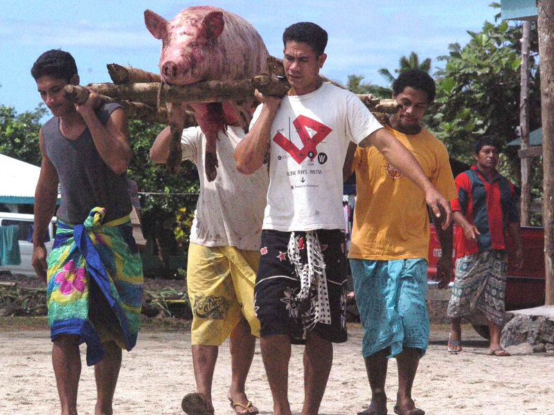 Samoan men carrying pig