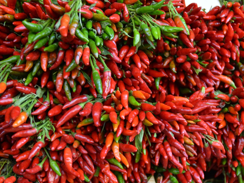 Bunches of red chile peppers