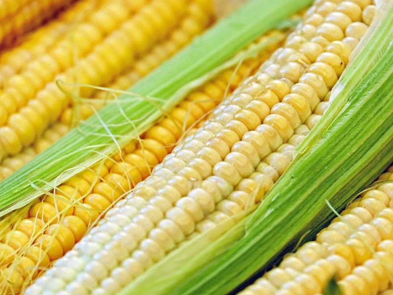 Cobs of fresh corn