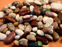 Heirloom dried beans