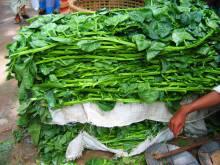 Indian vendor with a large bundle of fresh saag greens