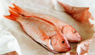 Fresh red snapper fish