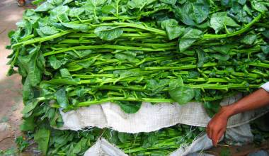 Indian vendor with a large bundle of fresh saag greens